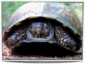 turtle-master